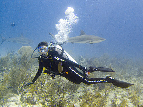 Where are all the sharks? - Scuba Diving, 2005