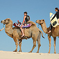 The camel expedition